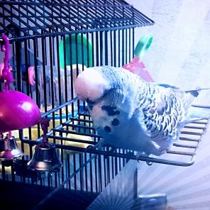 Harry the Birdie, November 16 at home. [By @HarrytheBirdie (Tw))