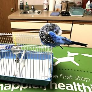 Harry on a typical vet visit [By @HarrytheBirdie]