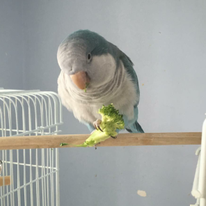 So I like to eat my broccoli in the middle of nowhere (By @bobbles_n_tiny Tim (IG))