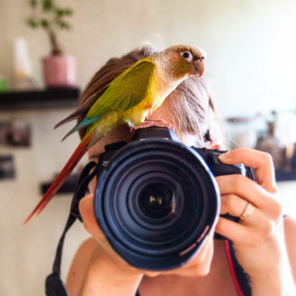 He doesn't like being in front of the camera (@cajou_the_conure (IG))