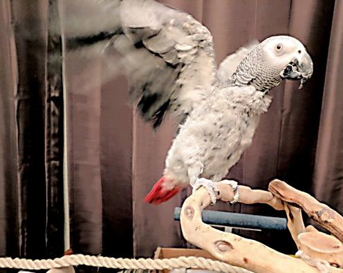 Kamiiiiii! Flapping! (By @greybirdy (Tw))