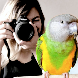 (Photo by @myParrotLife (IG))