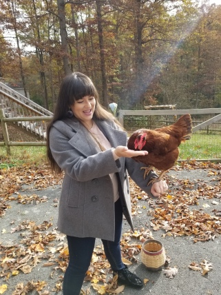 My hen receives a food reward for flying to and landing on my friend's arm