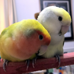 """Lovebirds Emerald and Maxins say """"Stay warm East Coast"""" and wish everyone a pleasant evening in the midst of the """"bomb cyclone"""" (Courtesy of @genejm29 (Tw))"""