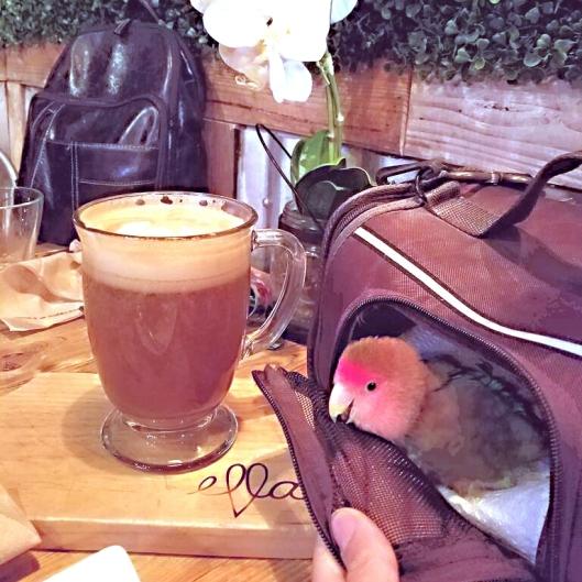 Cody socializes at Ella's Cafe (Courtesy of @birdhism (Tw/FB))