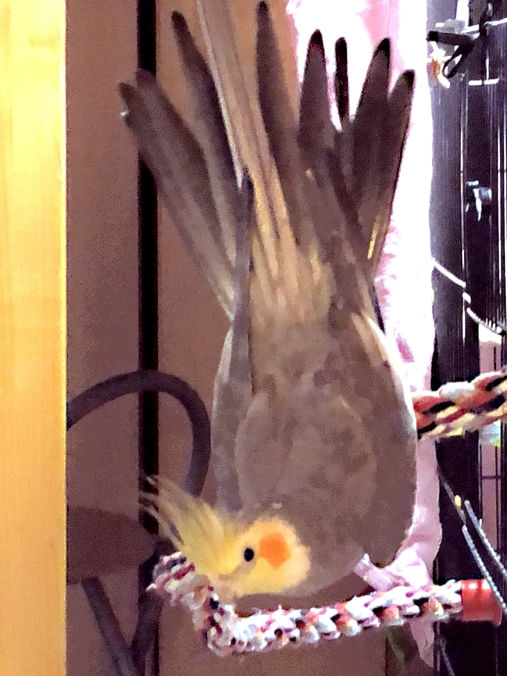 Bombi practices Downward Birdie Asana (Courtesy of @BombitheTiel (Tw))