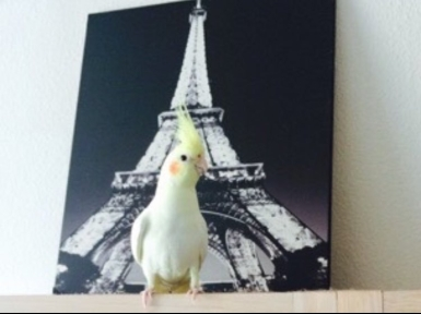 Suni scales The Eiffel Tower (Courtesy of @LagunaBirds (Tw))