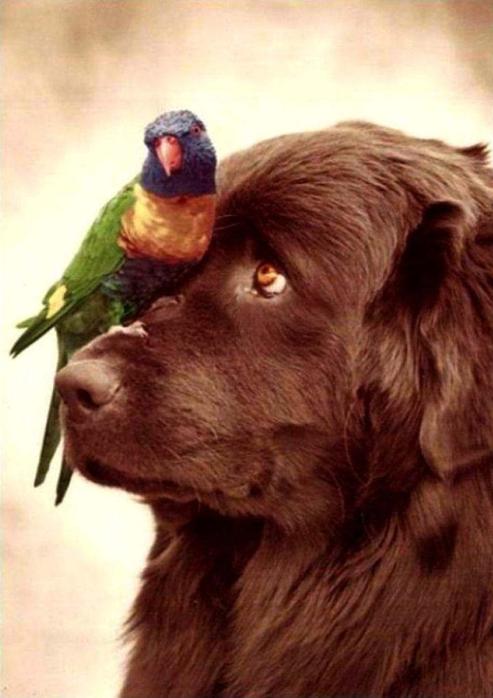 dog and lorikeet