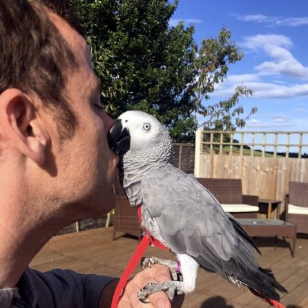 Or is it just the appearance of birdie #StockholmSyndrome? (Courtesy of @sidTHEparrot (Tw))