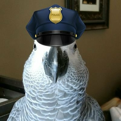 Thou shalt not mess with Jules! (11th Amendment to Birb Constitution) (Courtesy of @Bronson006 (Tw))