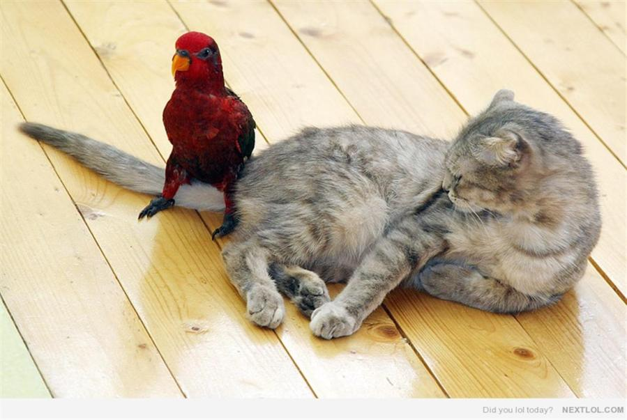 lory and cat