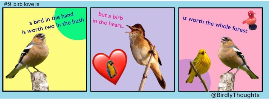Valentine's Day Contest - Birdy Throughts