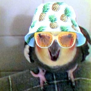 Readily disguised #birddominion (Courtesy of @ziggy_n_flower (Tw)/(IG))