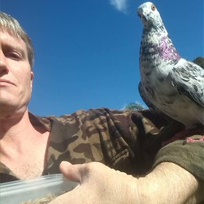 """Green Neck, one of the first pigeons to trust Benjamin and partner, lands on Benjamin's outstretched hand when he says """"Up"""" and walks up his arm or shoulder regardless of what Benjamin is doing (Courtesy of Benjamin Rosenzweig (lumpnboy (Tw)))"""