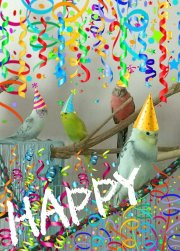 Pi's flockmates -- celebrate Sid's Dad's 40th birthday (Courtesy of @Daiva Coy (Tw))