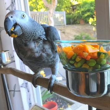 Belated Papaya Happy Birthday to Makena! (Courtesy of @MakenaNut (Tw))