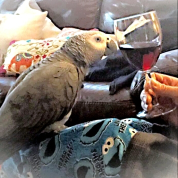 Cheers on your Hatch Day, Otto (Courtesy of @Keelingrob & @Caithean (Tw))