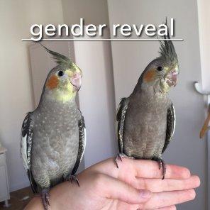 The results finally came back (Courtesy of Bird and Bailey (@birdyandbailey (IG))