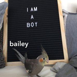 Woohoo! The pergect couple -- Bailey is a boy!! (Courtesy of @Birdyandbailey (IG))