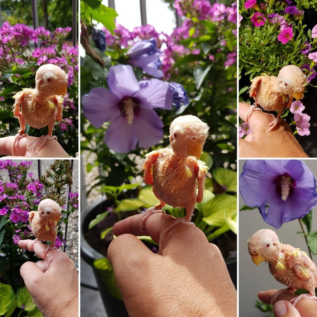 Coco's Garden Adventure (courtesy @featherless_budgie_coco (IG))