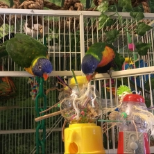 Skittles and Sprinkles test a toy (Courtesy of Kataki Sales (FB))