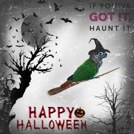 """""""If you got it, haunt it (Courtesy of @nuglifeofficial)"""