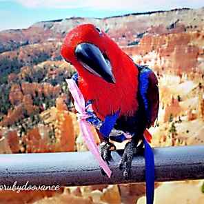 Ruby at Bryce Canyon with the hoodoos, not voodoos, silly! (Courtesy of @Rubydoovance (IG))