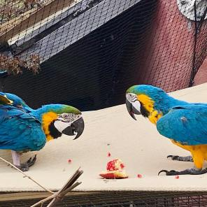 William and Arya share a pomegranate in their outdoor setting (Courtesy of @Aryawilliamrescue (IG))