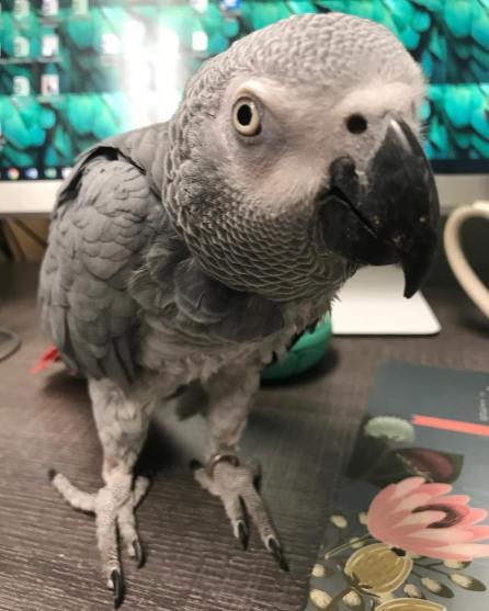 Meet Echo (Courtesy of @katiethemacaw (IG))