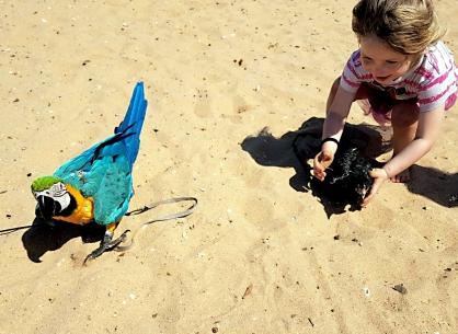 Learn those bird-handling skills early!!!! (Courtesy of Adrienne Bennett (FB) and @Krizstina.flock (IG))