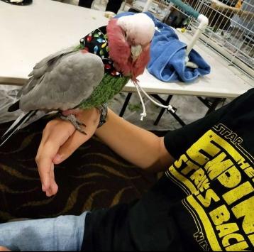 Bird social in Canberra, December 1