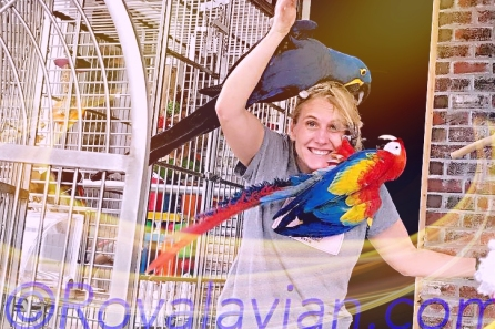 Nigel and scarlet macaw Koa have decided opinions about Michelle's coif (Courtesy of @Nigel_and_friends (IG))