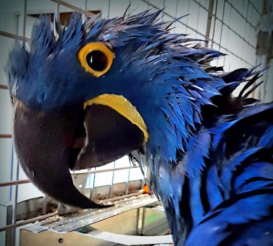 Blue after a shower (Courtesy of Heide Nilsen)