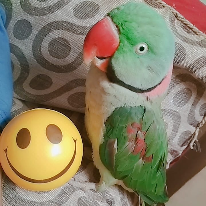 Smile -- While you still have a beak!