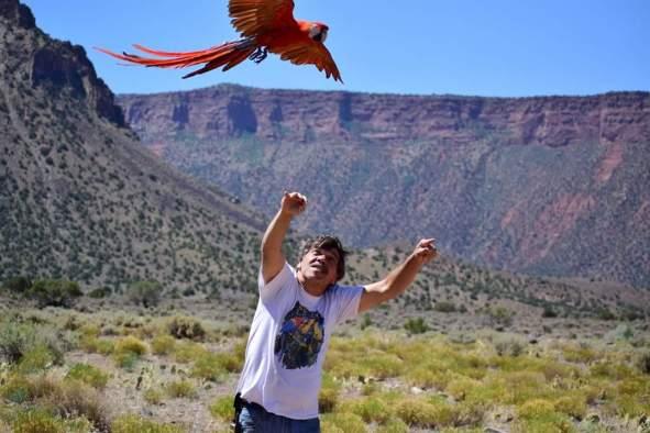 Percy aloft (Courtesy of Chris Armstrong)