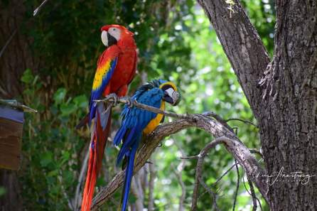 Percy, rescued macaw and Delilah (Courtesy of Chris Armstrong)