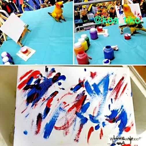 Sun conure Koa, Picasso of Parrots, demonstrates his finesse with a paintbrush! (Courtesy of @Koa_tiko (IG))