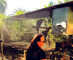 Aviary cages for large parrots typically measure 16 feet in length