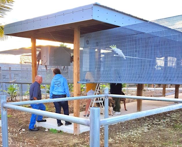 "Silva's aviculture academy under construction in the ""new"" style"