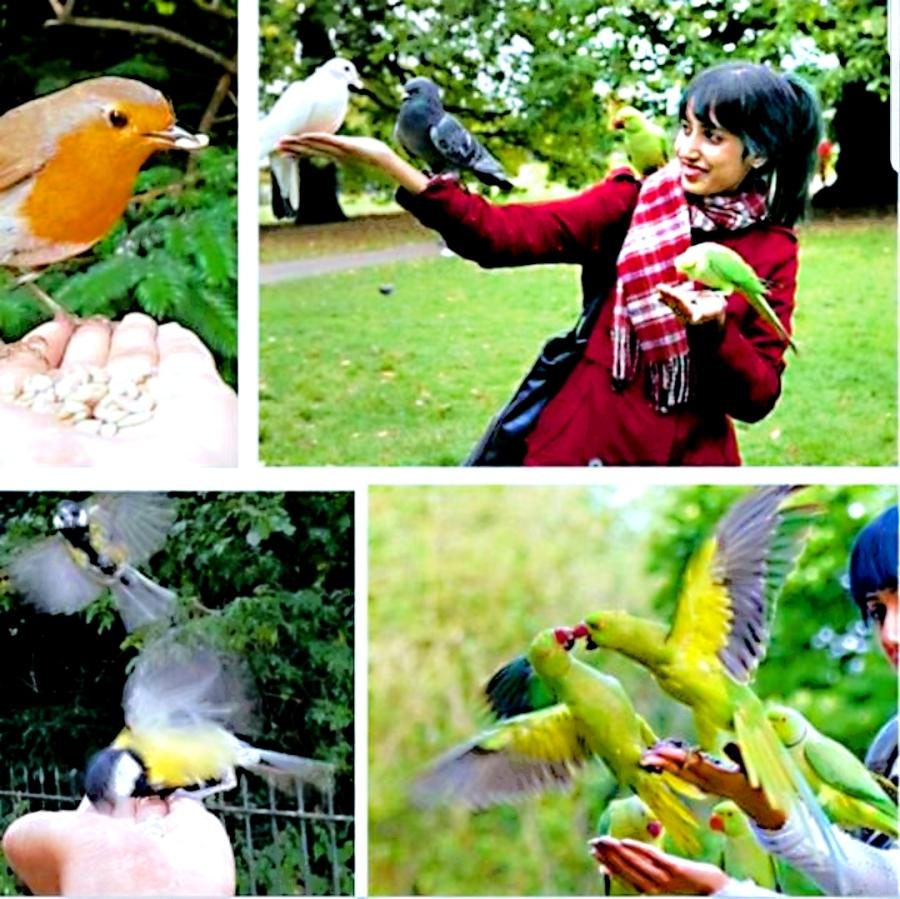 Anika charms the wild birds