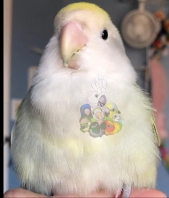Pear (Courtesy of @bird_tails)