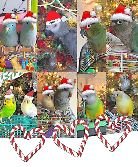 All the flock wishes you Happy Holidays! (Courtesy of @fluffy bird)