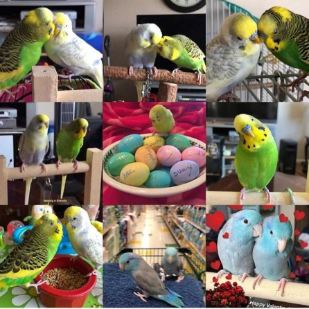 Sunny, Gazoo, Bloo and Zazul, 2018 Best 9 (Courtesy of @Tweety.n.friends)