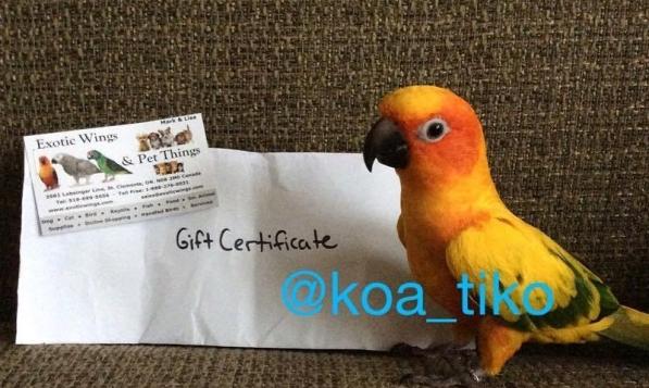 Koa of Koa & Tiko (Courtesy of @koa_tiko)