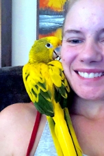 Golden conures have a reputation for easy socialization to humans (Courtesy of Shantel Telly Byrd)